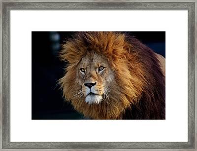 King Lion Framed Print