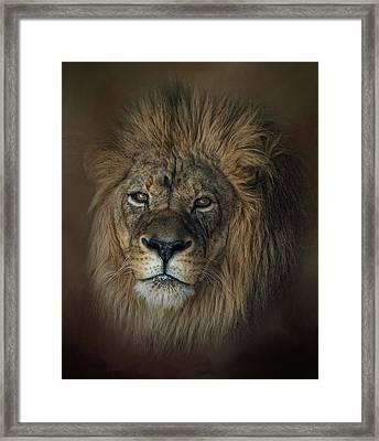King's Gaze Framed Print