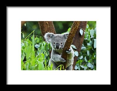 Eucalyptus Framed Prints
