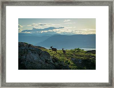 Kuipers Peak Deer Framed Print