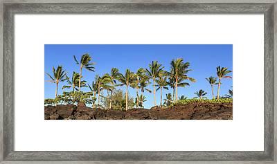 Golden Palms Framed Print