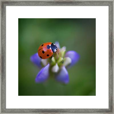 Framed Print featuring the photograph Lady Bug by John Rodrigues