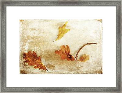 Framed Print featuring the photograph Last Days Of Fall by Randi Grace Nilsberg