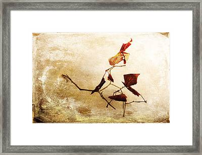 Framed Print featuring the photograph Last Movement by Randi Grace Nilsberg