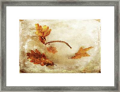 Framed Print featuring the photograph Late Late Fall by Randi Grace Nilsberg