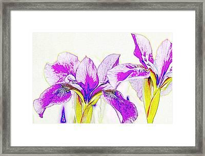Lavender Irises Framed Print