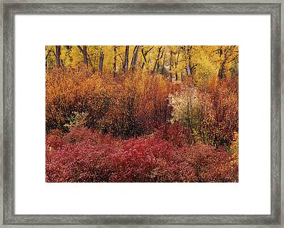 Layers Of Color Framed Print by Leland D Howard
