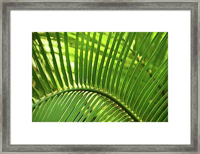 Framed Print featuring the photograph Leaf Abstraction I by Leda Robertson