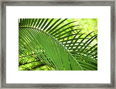 Framed Print featuring the photograph Leaf Abstraction II by Leda Robertson