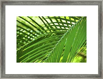 Framed Print featuring the photograph Leaf Abstraction IIi by Leda Robertson