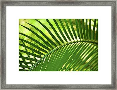 Framed Print featuring the photograph Leaf Abstraction Iv by Leda Robertson