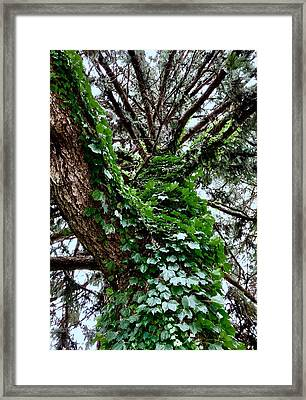 Framed Print featuring the photograph Leafy Tree Trunk by Lukas Miller