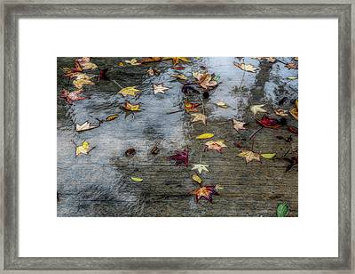 Leaves In The Rain Framed Print