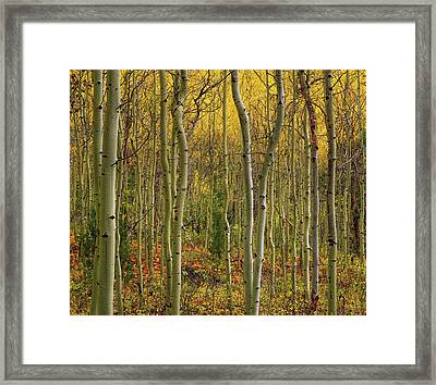 Lemhi Aspens Framed Print by Leland D Howard