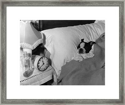 Let It Lie Framed Print by Fox Photos