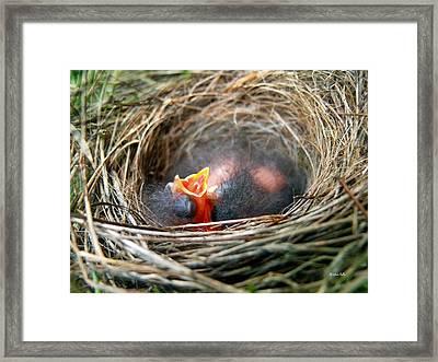 Life In The Nest Framed Print