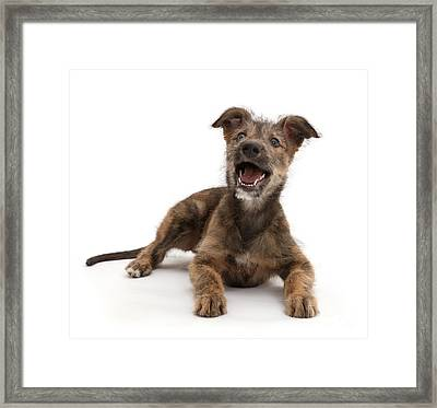 Framed Print featuring the photograph Life's A Bark by Warren Photographic