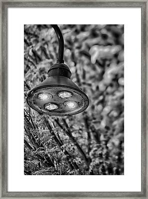 Lights In Town Framed Print