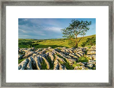 Limestone Pavement, Malham Cove Framed Print by David Ross