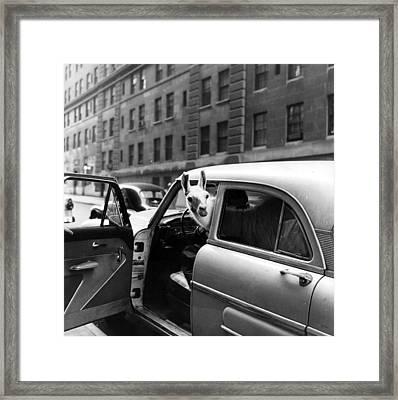 Linda Llama Framed Print