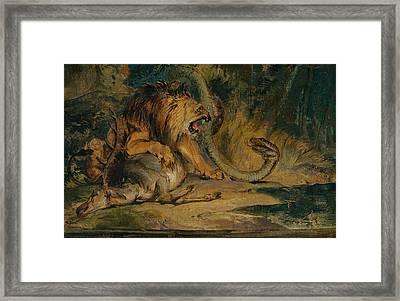 Lion Defending Its Prey Framed Print