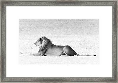 Framed Print featuring the photograph Lion In Wait by Rand