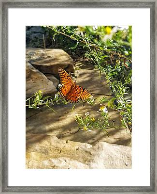 Framed Print featuring the photograph Little River Canyon Butterfly  by Rachel Hannah