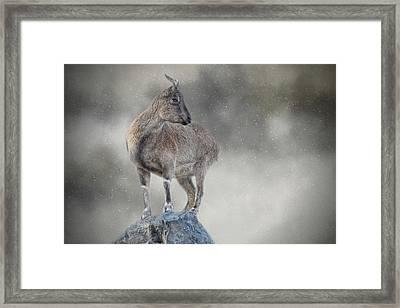 Little Rock Climber Framed Print