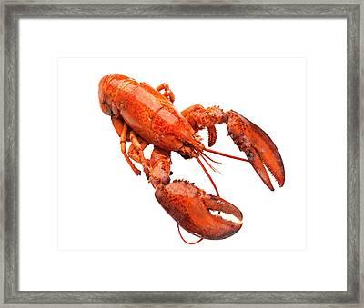 Lobster On White Background Framed Print by Johner Images