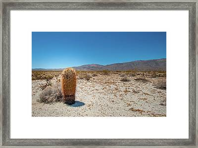 Lone Barrel Cactus Framed Print