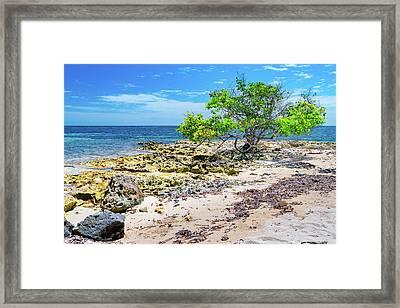 Lone Shore Tree Framed Print