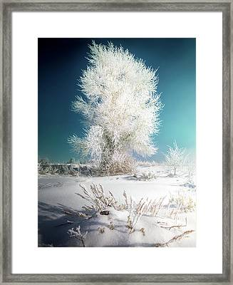 Lone Survivor / Grand Teton National Park  Framed Print
