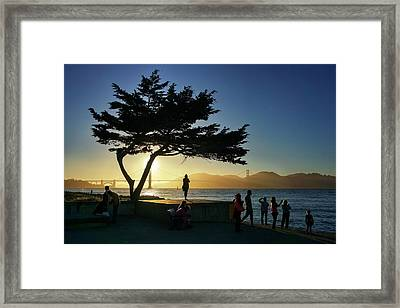 Framed Print featuring the photograph Lonely Tree At Crissy Field by Quality HDR Photography