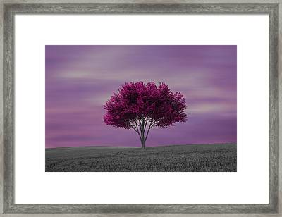 Lonely Tree At Purple Sunset Framed Print