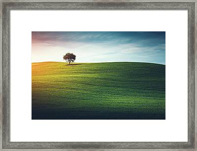 Lonely Tree In Tuscany Framed Print by Borchee
