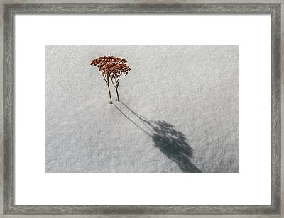 Long Shadow Of Winter Framed Print