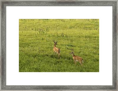 Framed Print featuring the photograph Look Both Ways by Scott Bean