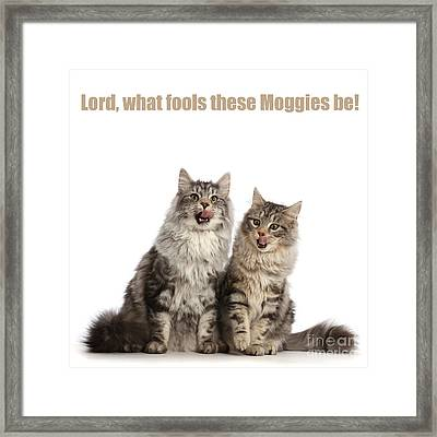 Framed Print featuring the photograph Lord, What Fools These Moggies Be by Warren Photographic