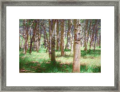 Lost In The Woods - Kenosha Pass, Colorado Framed Print