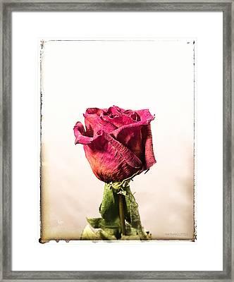 Love After Death Framed Print