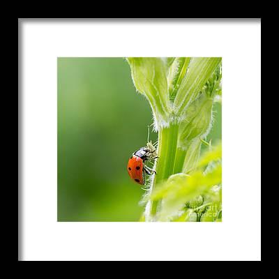 Coleoptera Framed Prints