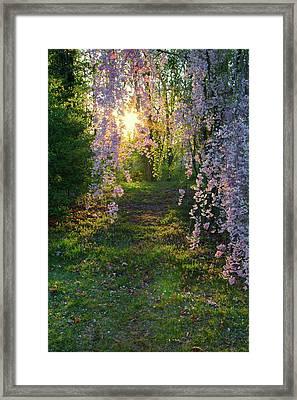 Magnolia Tree Sunset Framed Print