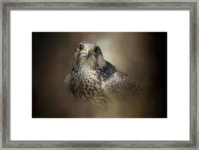 Majestic Hunter Framed Print