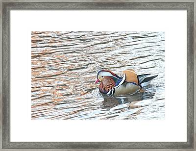 Framed Print featuring the photograph Mandarian_14_faa by Patricia Youngquist