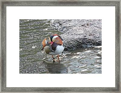 Framed Print featuring the photograph Mandarian_17_faa by Patricia Youngquist