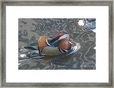 Framed Print featuring the photograph Mandarian_18_faa by Patricia Youngquist