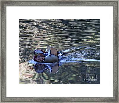 Framed Print featuring the photograph Mandarin Duck 10 by Patricia Youngquist