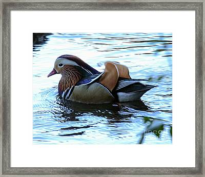Framed Print featuring the photograph Mandarin Duck 6 by Patricia Youngquist