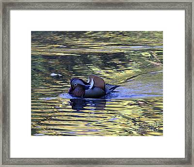Framed Print featuring the photograph Mandarin Duck 8 by Patricia Youngquist