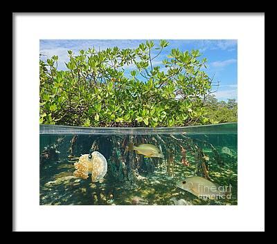 Aquatic Vegetation Framed Prints